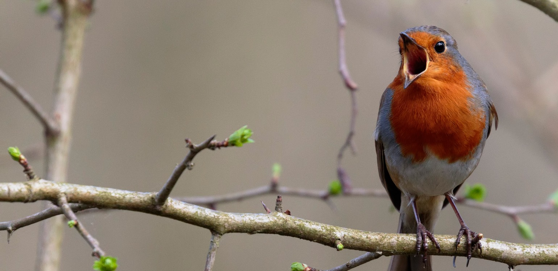 Esgotado | Webinar: O canto das aves e o Censo de Aves Comuns