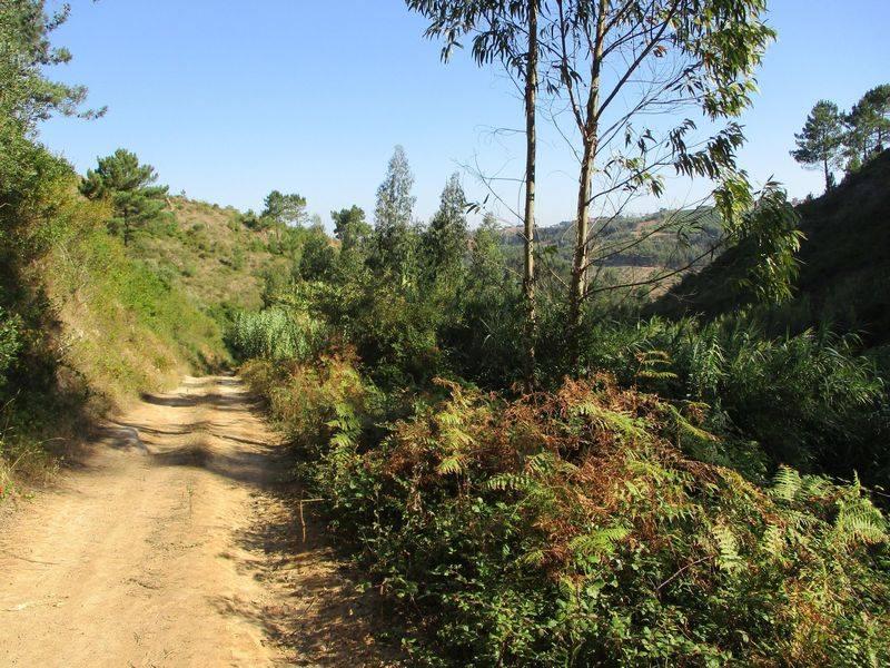Caminhando no Sobreiro e no Vale do Rio Cuco