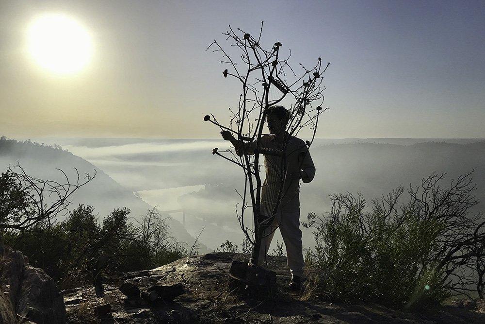 Concerto para uma Árvore