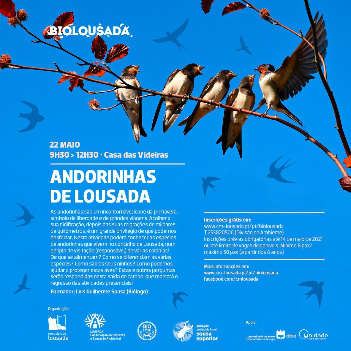 BioLousada: Andorinhas de Lousada