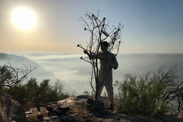 Concerto para uma Árvore + 7 Poemas para Um Mundo Novo