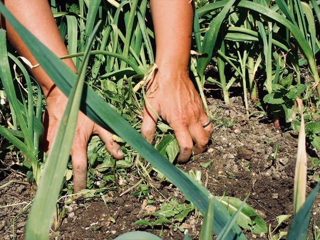 Conversa «Fazer agroecologia na cidade» HORTAS DE LISBOA | Em direto no Facebook