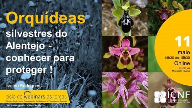 Webinar – Orquídeas silvestres do Alentejo – conhecer para proteger