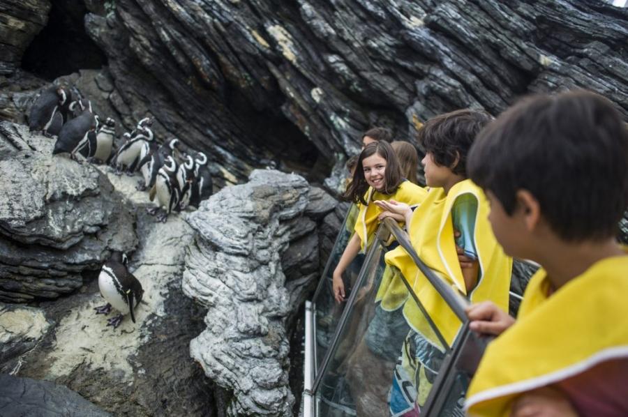 Oceanário celebra Dia Mundial dos Pinguins
