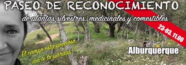 Paseo de reconocimiento de plantas silvestres, medicinales y comestibles