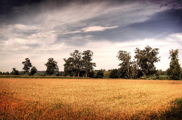 Campo (Baixo Mondego Series) por Coursier